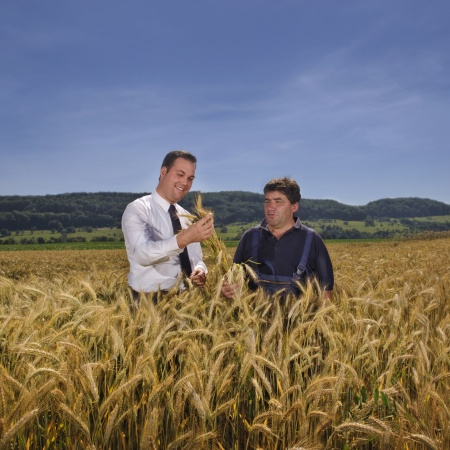 Mit Emil Feucht, Landwirtschaftsmeister in Lauchringen bei der Begutachtung seiner Ernte.